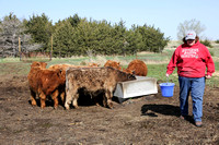 Highland_cattle_0016