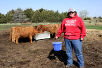 Highland_cattle_0021