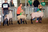 07-23-14 DC Fair Sheep Show