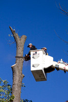 Tree_removal_0005